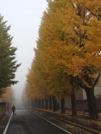 朝霧の並木道