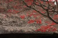 秋を見つけた!