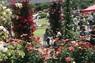 【多摩区】【第57回 平成25年度】 入賞 バラの香りに包まれて