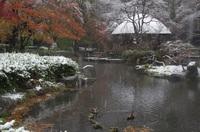 秋彩54年目の初雪