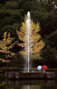 銀杏と噴水