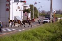 """かわさき再発見""""我が町の馬優先道"""""""