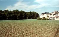 見事な野菜畑