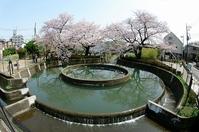 桜の円筒分水