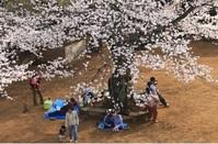 桜の下の語らい
