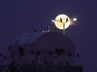 鳥の楽園と満月
