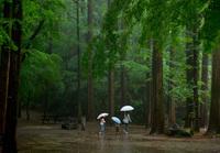 翠雨の季節