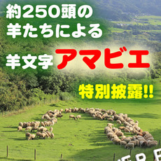 "☆From Mother Farm with wish ☆""Sheep letter amabie"" special announcement☆"