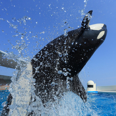 """Let's enjoy Kamogawa Sea World and Mother Farm together ☆Period-limited special plan """"Kira glitter"""""""
