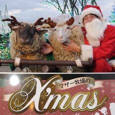 マザー牧場でハッピーなクリスマスを過ごそう♪