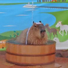 「カピバラの打たせ湯」は11月26日【いい風呂の日】スタート!