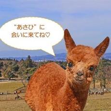 """☆アルパカの赤ちゃん""""あさひ""""誕生記念☆ 一緒の名前のお客さま「マザーファームツアー」へご招待!!"""