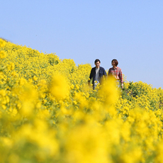 """Let's enjoy spring of farm which """"sees, and touches, and tastes"""" festival 2018 in 2/3 - 5/27 spring all day♪"""