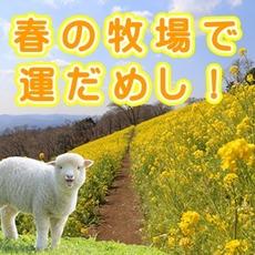 Rape flowers bloomed! It is test of luck in spring farm!