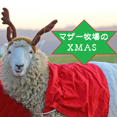 ゆるさがかわいい♡マザー牧場のクリスマス☆