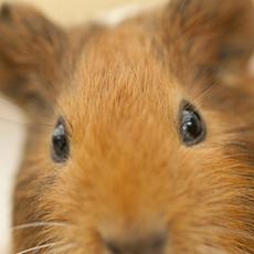 かわいい動物たちが目の前に?!360度動画で動物たちを見てみよう!