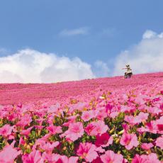 「桃色吐息」ピンクのお花畑へでかけませんか?