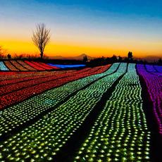 ☆イルミネーション「光の花園フォトコンテスト」  入賞発表☆