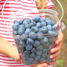 """Blueberry Picking"" now being held☆"