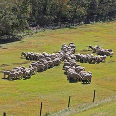 牧羊犬が大活躍!「冬フェス」