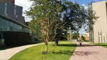 さくら並木と校舎