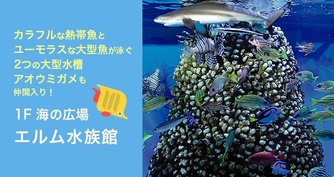 海の広場 エルム水族館