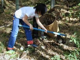 <Apr>Bamboo shoot digging