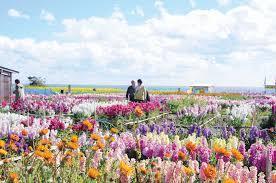 <Jan~Mar>Picking flowers in the flower garden