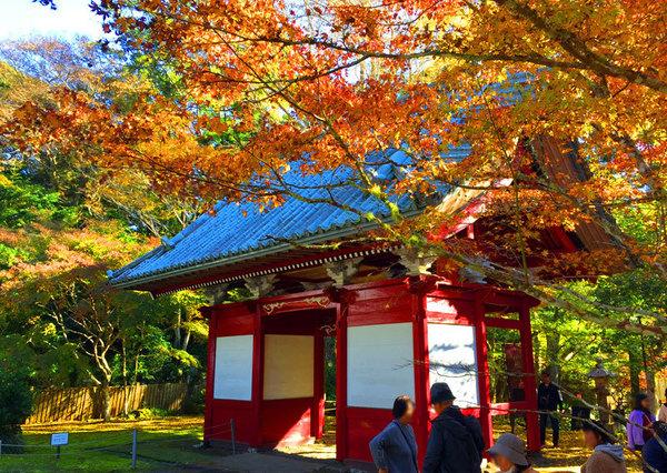 <Nov~Dec>Seeing Autumn leaves