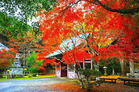 Komatsu Temple               An ancient temple that lasts more than 1,200 years in the deep mountains of Chikura. It is widely known as one of the few famous autumn leaves in Minamiboso.