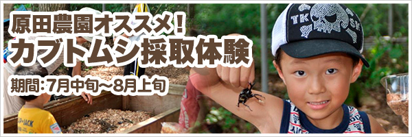 カブトムシ狩り体験