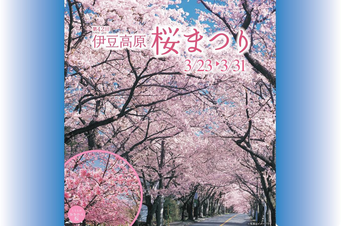 第42回伊豆高原桜まつり