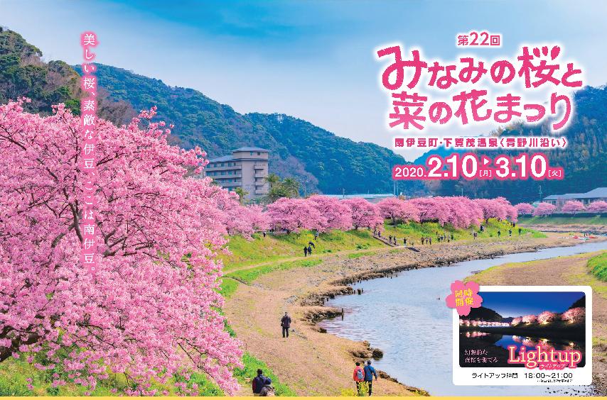 Cherry blossoms of Minami