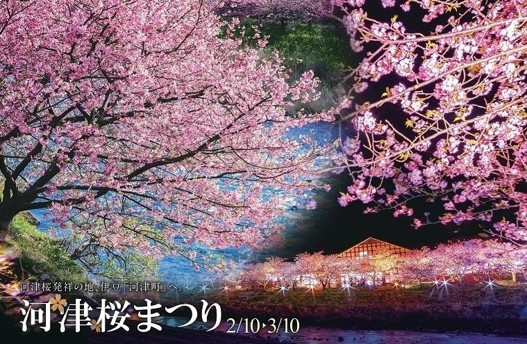 河津桜まつり開催