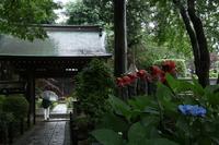 小雨降る妙楽寺