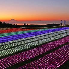イルミネーション「光の花園」10月30日スタート!!