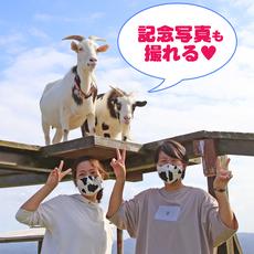 10月限定「青空さんぽヤギにエサやり体験」