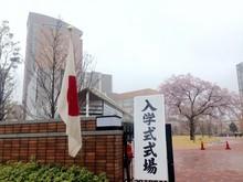 入学式当日の桜