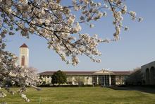 シンボルの時計台と満開の桜   共栄写真提供